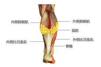 腿上的肌肉怎么减